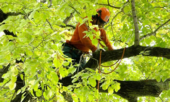Tree Trimming in Miami Beach FL Tree Trimming Services in Miami Beach FL Tree Trimming Professionals in Miami Beach FL Tree Services in Miami Beach FL Tree Trimming Estimates in Miami Beach FL Tree Trimming Quotes in Miami Beach FL