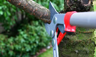 Tree Pruning Services in Miami Beach FL